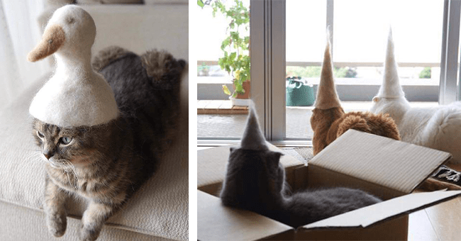 18 images of cats with hats made from their own fur | thumbnail left cat with duck hat, thumbnail right three cats with pointy hats