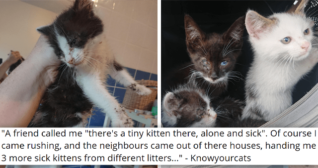 """viral imgur thread about four sick and injured kittens getting rescued 