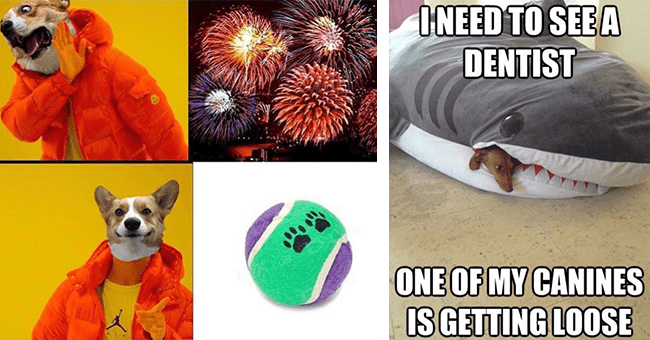 """26 animal memes   thumbnail left drake inspired dog meme fireworks and tennis ball, thumbnail right shark pillow with tiny dog coming out of mouth """"need to see a dentist"""""""