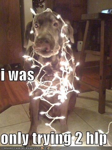 christmas helping mess whatbreed - 1485572864