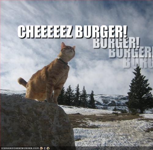 cheezburger lolcats loud shouting - 1486033152
