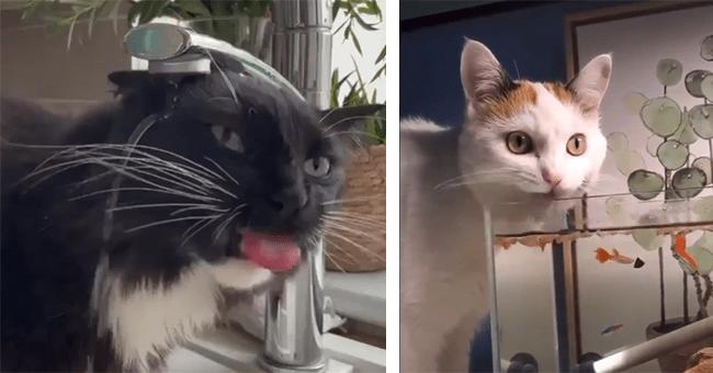 25 cat gifs   thumbnail left cat head under sink, thumbnail right cat above fish tank