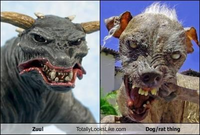 animals dogs Ghostbusters Sam worlds-ugliest-dog Zuul - 1486578432