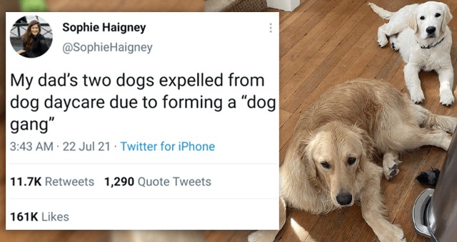 """tweets about dogs getting expelled from doggy daycare 