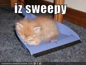 cute dustpan kitten lolcats lolkittehs sleeping sweepy - 1486797568