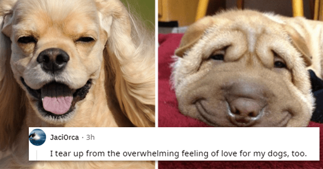 12 text images about dog appreciation | thumbnail left and right dogs with reddit text foreground