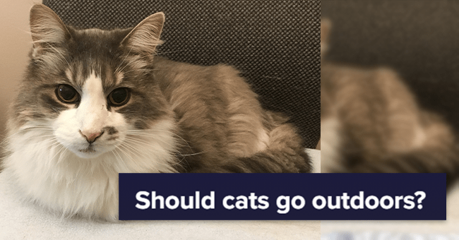 """13 cat images and text surrounding cats going outdoors 