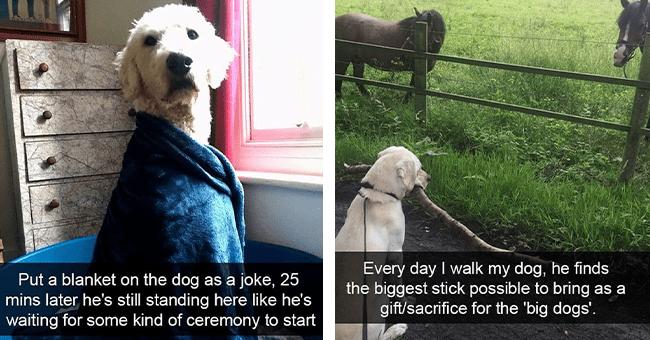 12 dog snaps | thumbnail