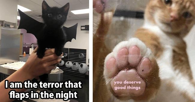17 cat memes   thumbnail left small black cat terror meme, thumbnail right cat paw you deserve good things meme