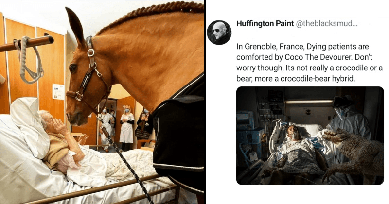 horse, hospital, therapy, illness, terminal illness, patient, therapy horse, twitter, grim reaper, death