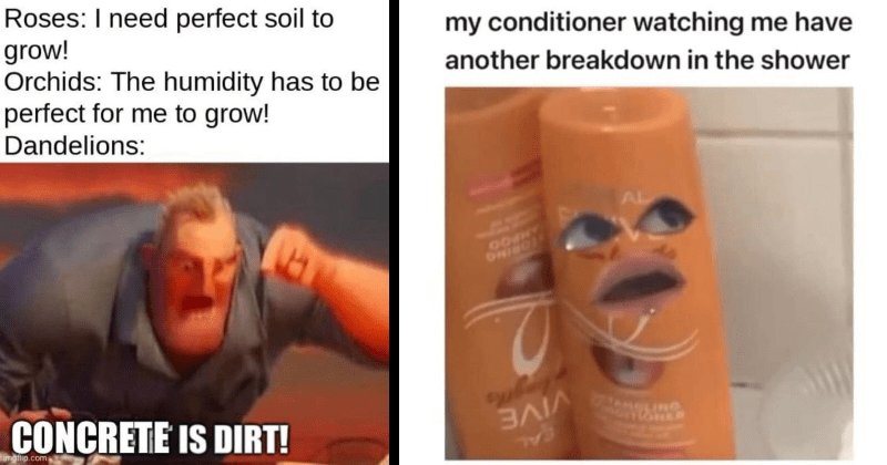 random, random memes, funny, funny memes, lol, lmao, meme dump, dank memes