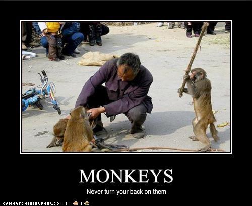 lolmonkey lolmonkeys monkey murder stick - 1488455424
