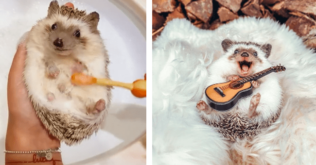 15 images and vids of mr. pokee the hegehog | thumbnail left mr. pokee getting a bath, thumbnail right mr. pokee holding guitar