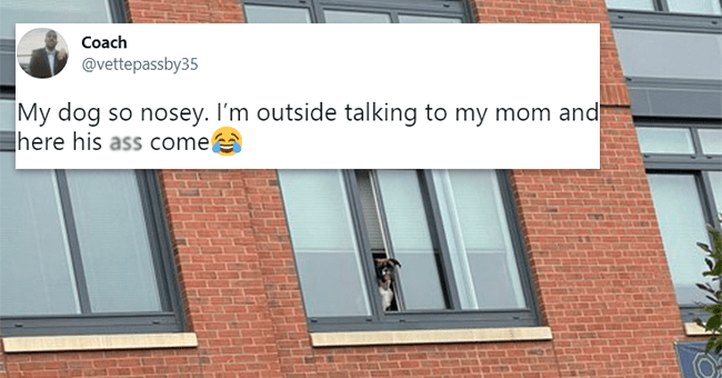 12 animal related tweets | thumbnail dog looking out of window with tweet text foreground