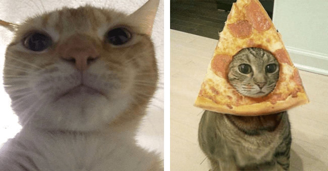 39 cool cat images   thumbnail left cat looking at camera face close up, thumbnail right cat with slice of pizza on head