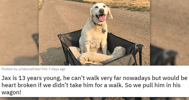 pics of the cutest animals of the week | thumbnail includes a picture of a dog in a cart 'Jax is 13 years young, he can't walk very far nowadays but would be heart broken if we didn't take him for a walk. So we pull him in his wagon! u/naturalhiker705'