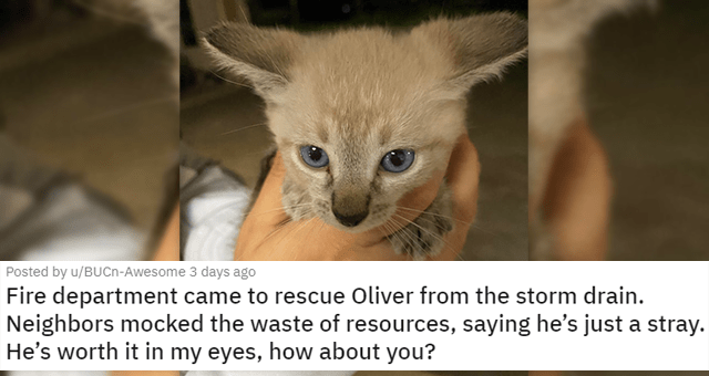 a collection of posts about cats | thumbnail includes a picture of a kitten 'Fire department came to rescue Oliver from the storm drain. Neighbors mocked the waste of resources, saying he's just a stray. He's worth it in my eyes, how about you? u/BUCn-Awesome'