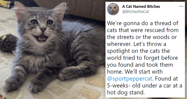 twitter thread about rescued stray cats | thumbnail includes a picture of a kitten and one tweet 'Cat - A Cat Named Bitches @BitchestheCat We're gonna do a thread of cats that were rescued from the streets or the woods or wherever. Let's throw a spotlight on the cats the world tried to forget before you found and took them home. We'll start with @sportpeppercat. Found at 5-weeks- old under a car at a hot dog stand.'