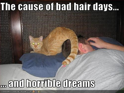 dreams,evil,hair,horrible,lolcats,sleeping