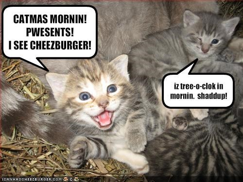 annoying cheezburger christmas cute kitten lolcats lolkittehs presents