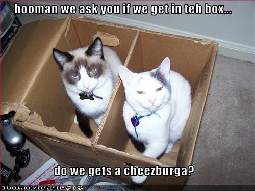 Cheezburger Image 1491474176