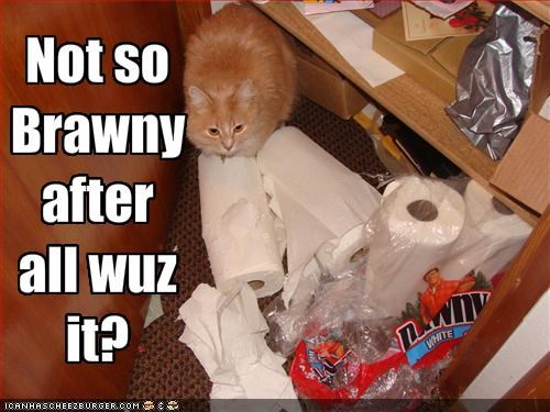 brawny,destruction,ginger,lolcats,mess,paper towels