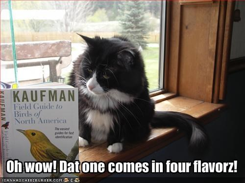 birds,book,flavor,hungry,lolcats,murder,nom nom nom,WoW