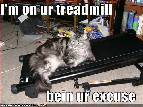 excercise excited excuse fat lolcats treadmill - 1494513920