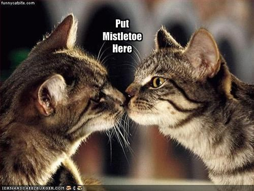 cute,invisible,KISS,kissing,lolcats,love,mistletoe