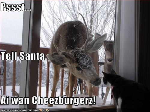 Cheezburger Image 1496236800