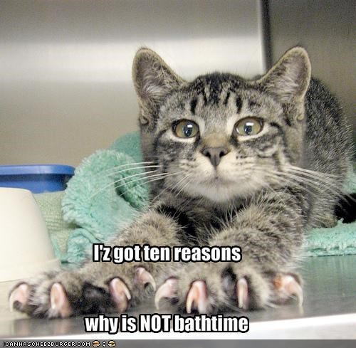 bathtime claws kitten lolcats lolkittehs reasons threats - 1496471808