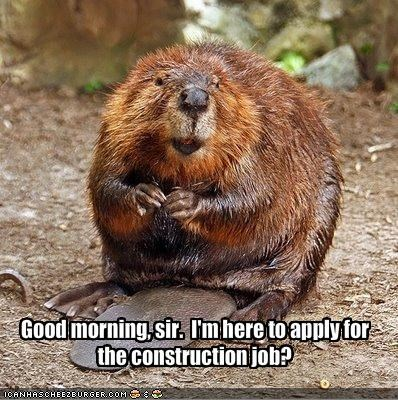 beaver construction job lolbeaver lolbeavers work - 1497984768