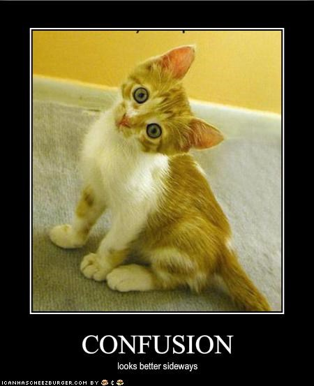 confusion,cute,ginger,kitten,lolcats,lolkittehs,sideways