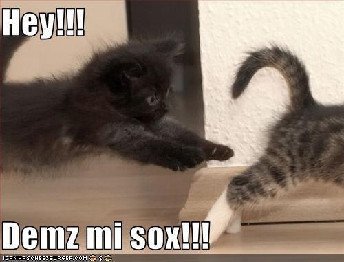 chase cute kitten lolcats lolkittehs socks - 1499408640