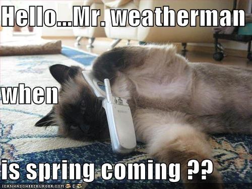 Hellomr Weatherman When Is Spring Coming Cheezburger