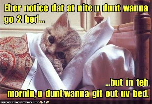 bed cute kitten lolcats lolkittehs nap sleeping - 1500022016