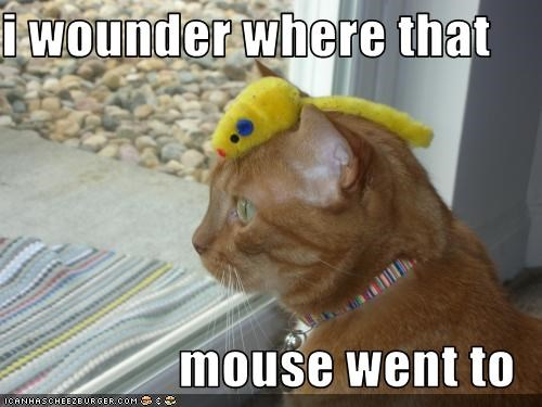 i wounder where that   mouse went to
