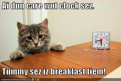clock early hungry lolcats morning nom nom nom - 1500765952