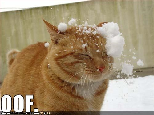 fight,hit,holiday lols 2010,lolcats,oof,snow,snowball