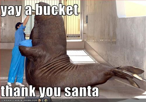 Yay A Bucket Thank You Santa Cheezburger Funny Memes Funny Pictures Pepsi containsmore dihydrogen mmonoxidethanmostceaning no thank you memeful.com how is this legal!? cheezburger