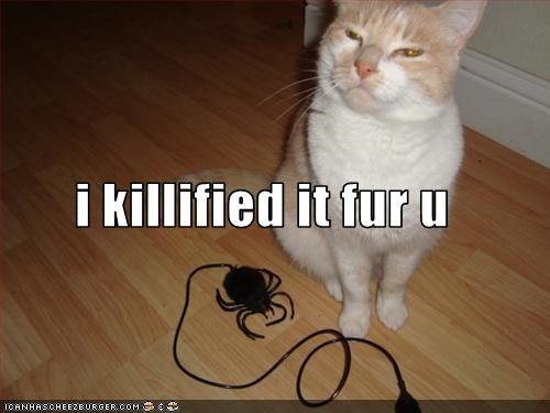 killed,lolcats,murder,proud,spider,toy