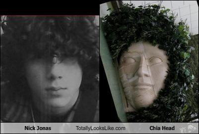 Nick Jonas Totally Looks Like Chia Head