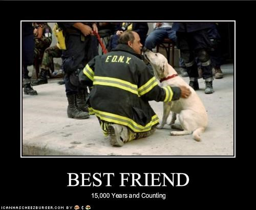 best friend FDNY labrador mans-best-friend police - 1503293696