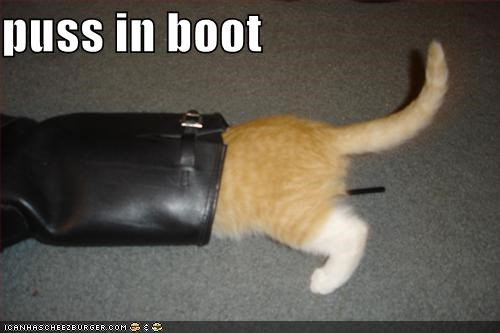 boot,ginger,lolcats,puss
