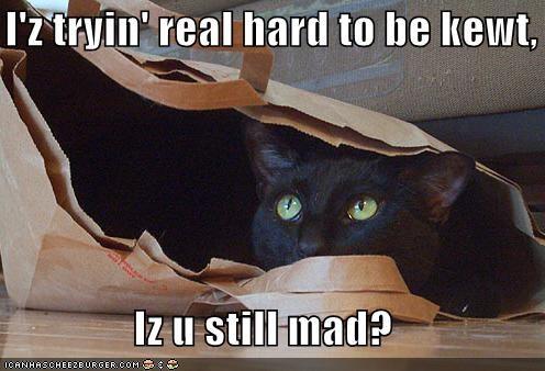 I'z tryin' real hard to be kewt,  Iz u still mad?