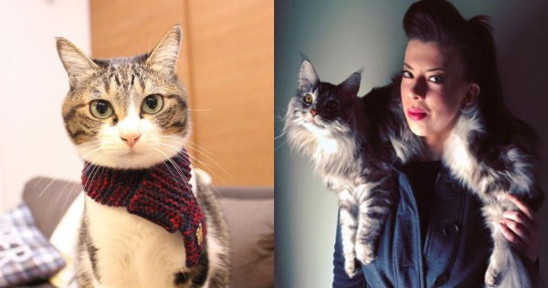 scarf,fashion,accessories,cat scarf,trending,Cats