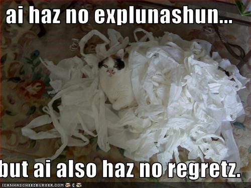destruction,lolcats,mess,regrets,smug,toilet paper