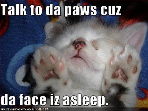 cute kitten lolcats lolkittehs paws sleeping - 1504837888