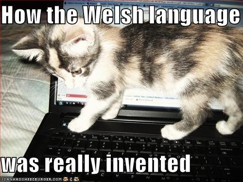 cute kitten laptop - 1508877056