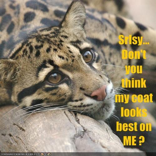 clouded leopard coat cute fur srsly - 1508885248